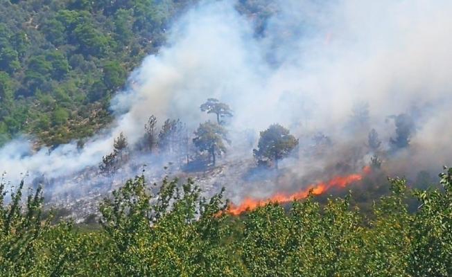Arı kovanlarının bulunduğu bölgede yangın