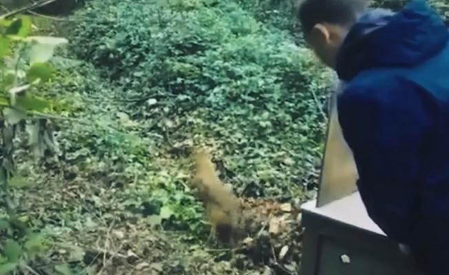 Bursa'da tedavi olan hayvanlar yaban hayata böyle döndü