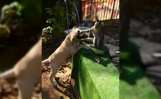 Kedi ile köpeğin inanılmaz dostluğu