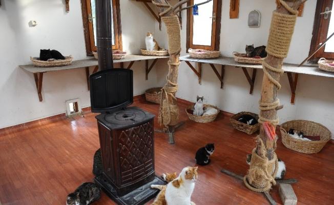 (Özel) Bu kediler villalarda sobanın başında kışın tadını çıkarıyor