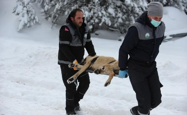 (Özel) Uludağ'da hayat kurtaran operasyon...