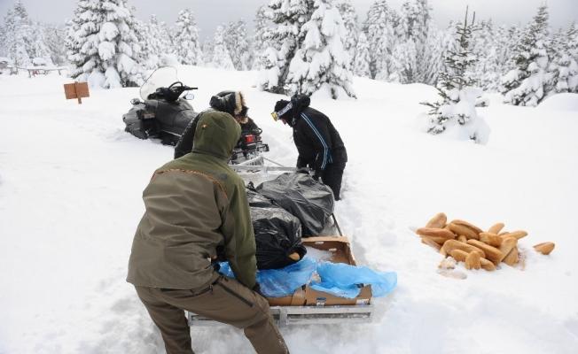 (Özel) Uludağ'da kar motoru ile yaban hayvanlarını beslediler