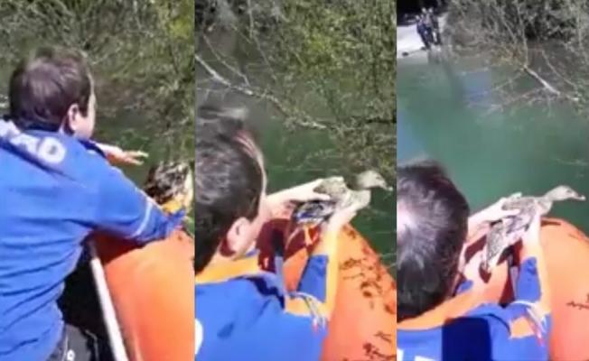 Misinaya takılan ördek AFAD tarafından kurtarıldı