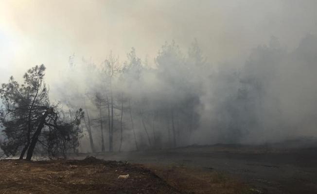 Akçabük Mahallemizde meydana gelen orman yangını