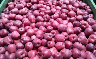 Eğirdir'den Afrin'deki Mehmetçiğe elma