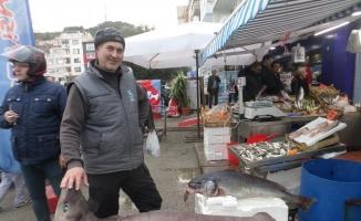 (Özel) Marmara'da dev köpek balığı yakalandı